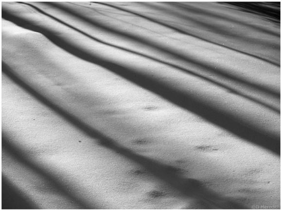 Tree trunk shadows on snow.