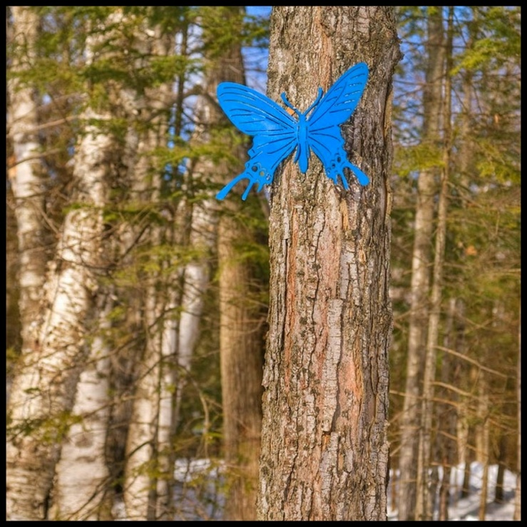 July Squares: Giant Blue Butterfly.