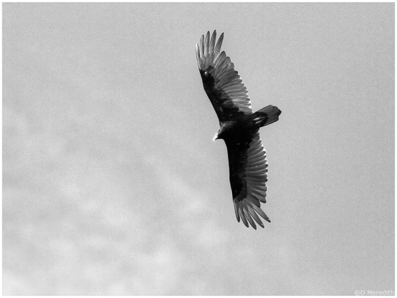Cee's B & W Photo Challenge: Anything that Flies.
