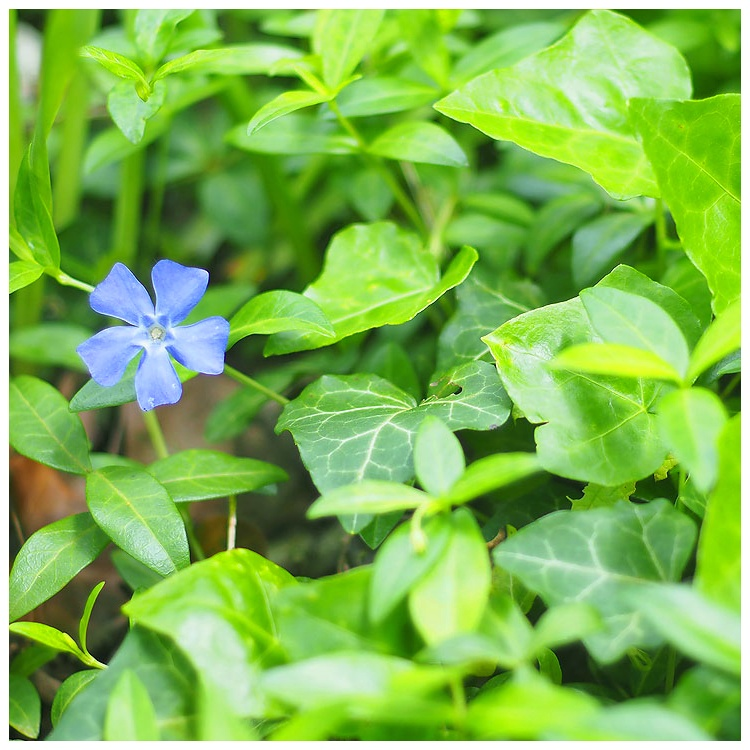July Squares: Periwinkle Blue.