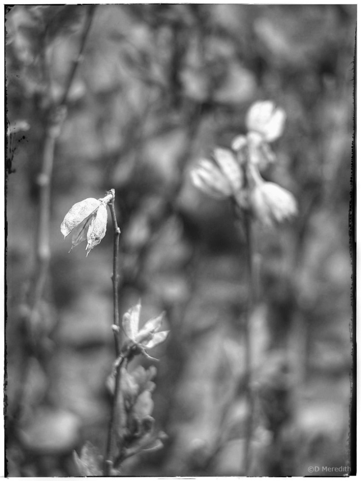 Old seed pods and new leaves.