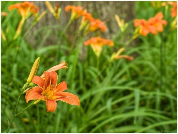 Weekly Prompts Photo Challenge: Bloom.