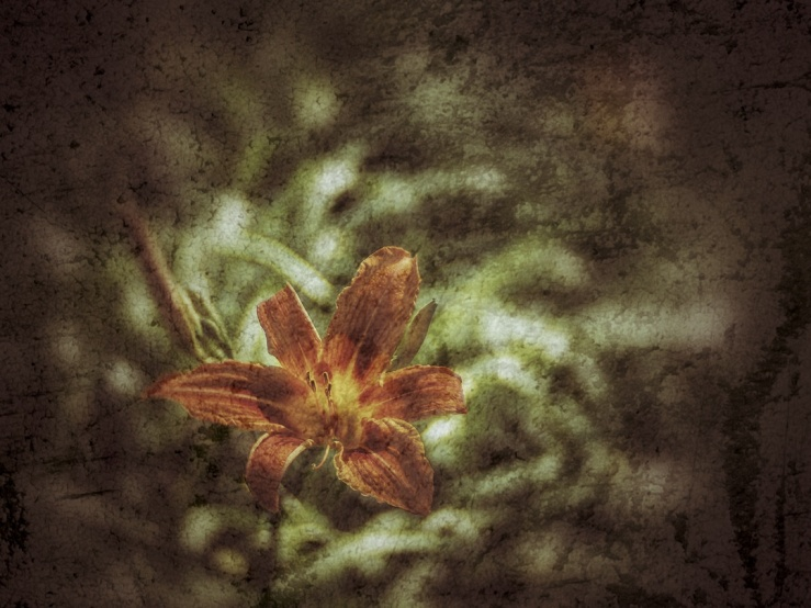 Orange Day-Lily low key version.