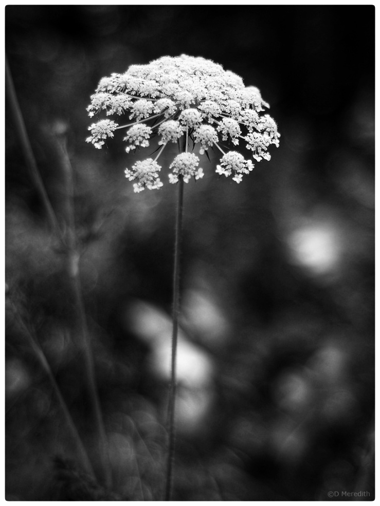 Monochrome Monday: 29th July 2019
