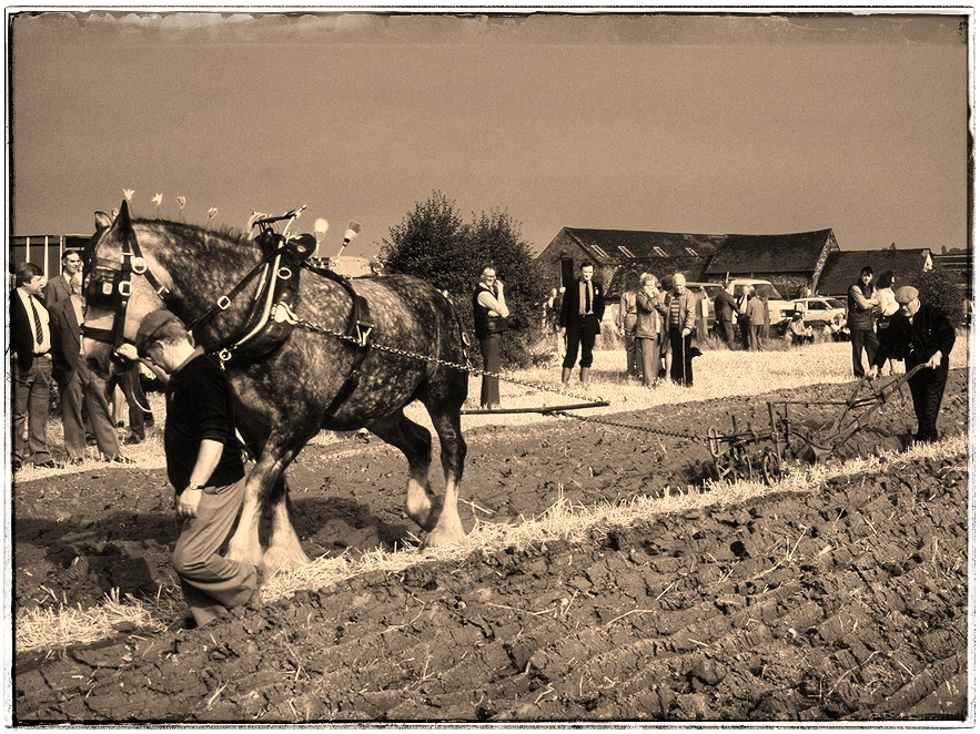 Weekly Prompts Photo Challenge: Sepia.