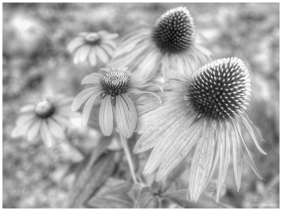 Monochrome Monday: 2nd September 2019