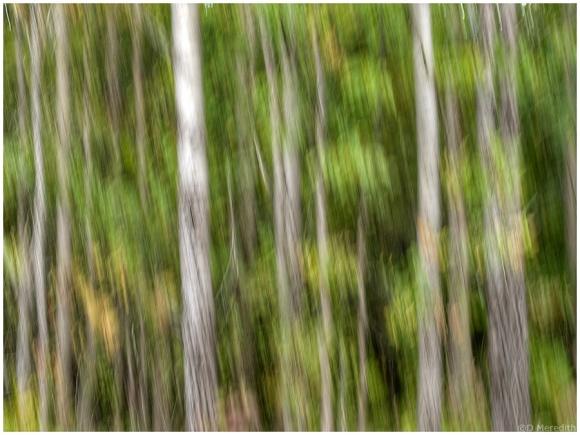 CFFC: Trees.