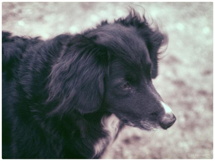 Lens-Artists Photo Challenge: Precious Pets.