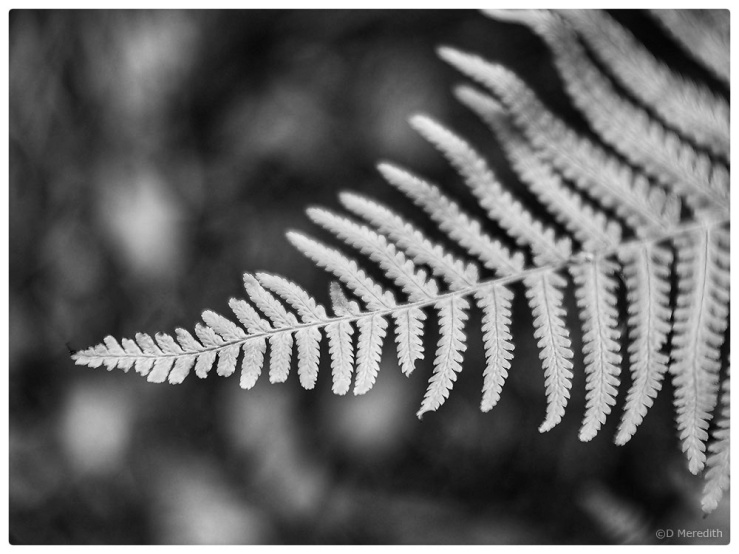 Monochrome Monday: 30th September 2019