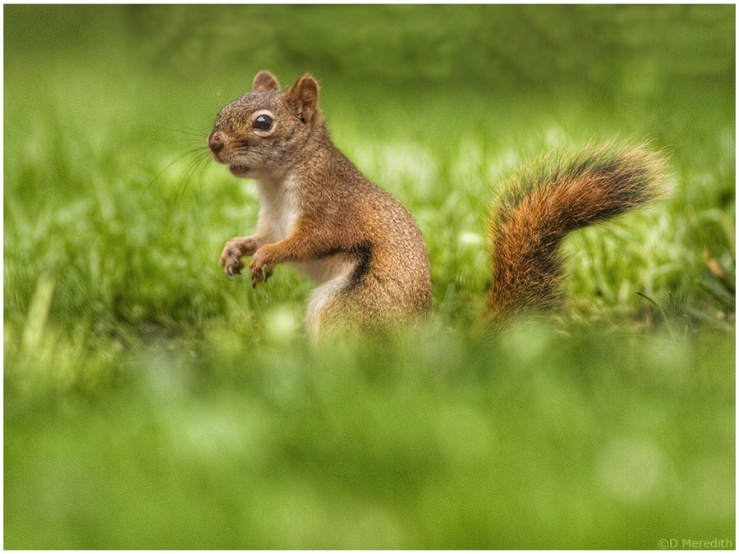 Six Word Saturday: Where Did I Leave My Nuts?