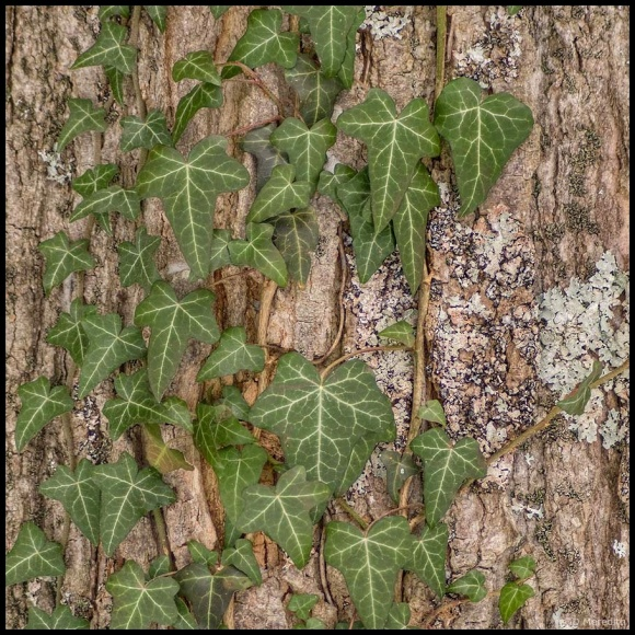 October Squares: A Variety of Lines on a Tree Trunk