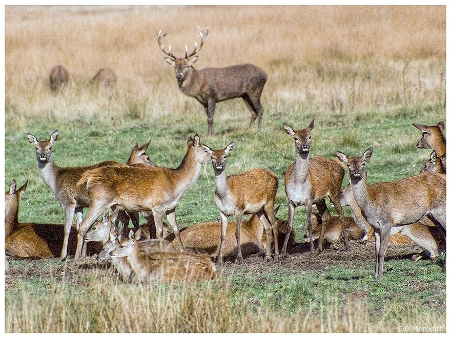Throwback Thursday: Red Deer