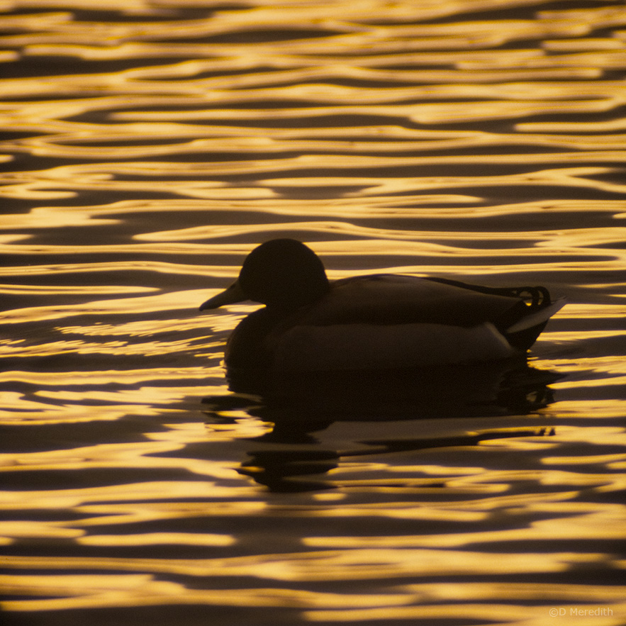 October Squares: Lines of Ripples at Sunset