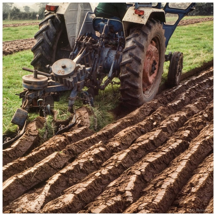 October Squares: Lines of Furrows