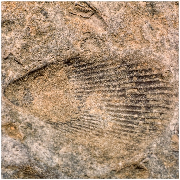 October Squares: Fossil Lines