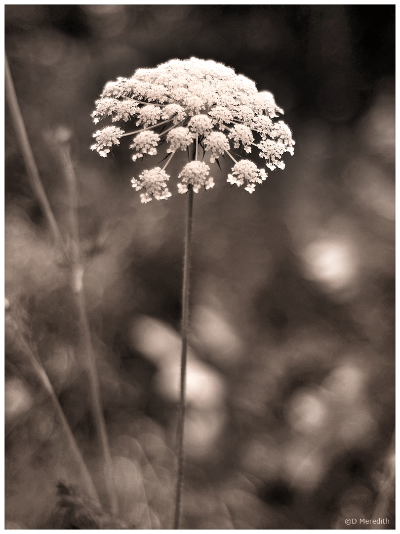 One Word Sunday: Sepia