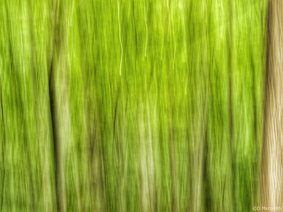 Cee's Fun Foto Challenge: Green