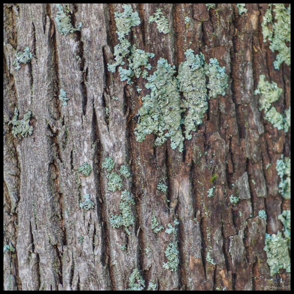 October Squares: Lichen and Lines
