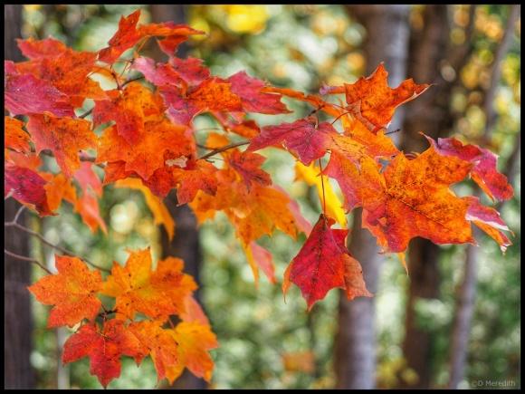 Cosmic Photo Challenge: Autumn Leaves/Autumn Light