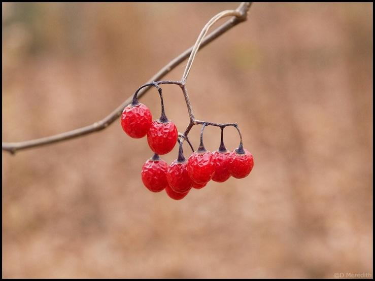 Friendly Friday: Fruit