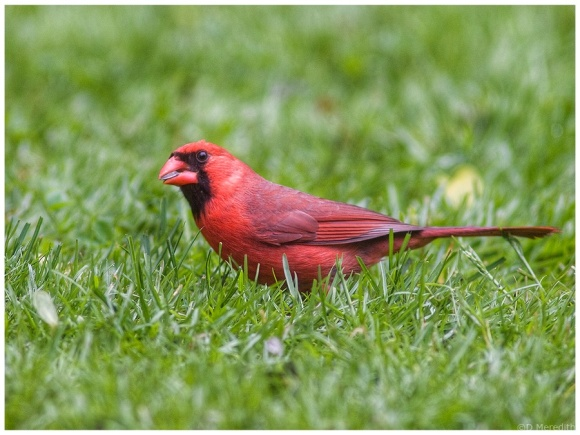 Weekly Prompts Photo Challenge: Flamboyant Red