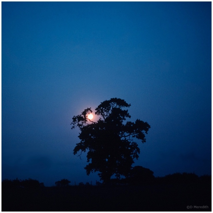 January Squares: Oak Tree by Moonlight