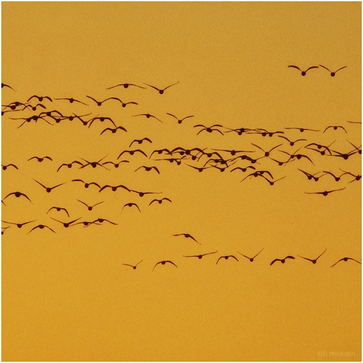 January Squares: Lines of Flight