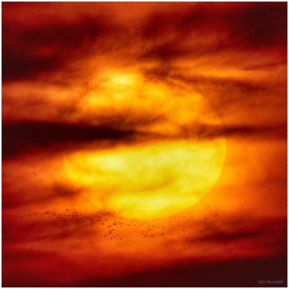 January Squares: Giant Orange Light