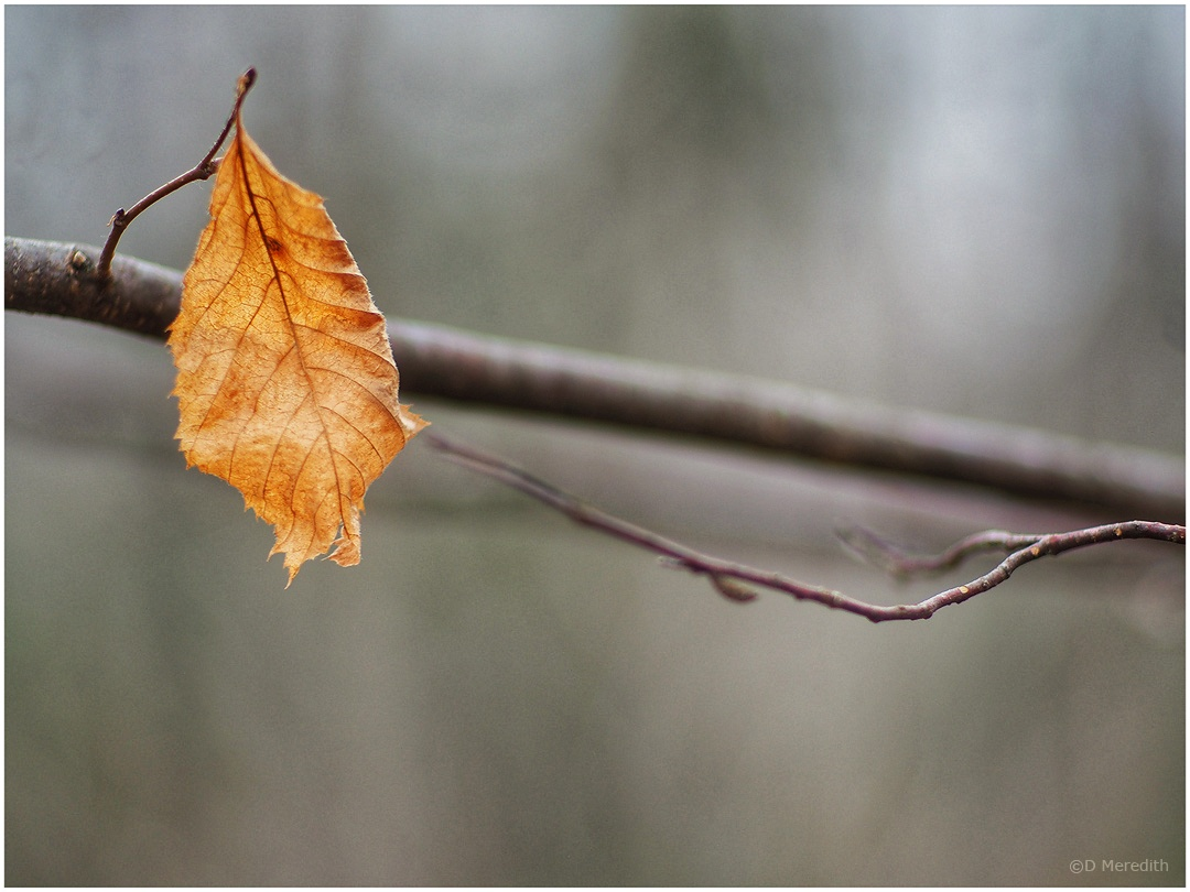 Six Word Saturday: A Solitary Brown Leaf in Winter