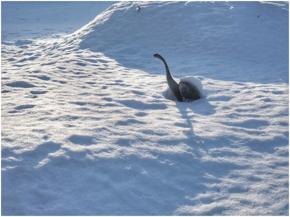 Six Word Saturday: A Small Dinosaur in the Snow