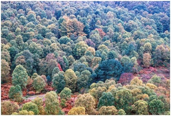 Cee's Fun Foto Challenge: Autumn Scenes