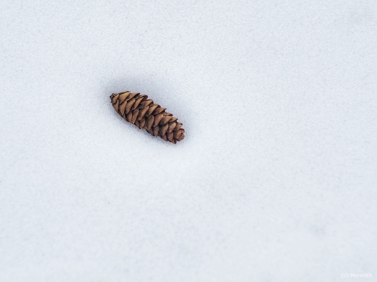 Six Word Saturday: A Pine Cone in the Snow