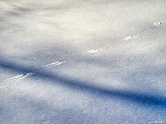 Six Word Saturday: Shadows and Tracks on the Snow