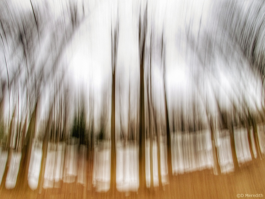 Lens-Artists Photo Challenge: Change Your Perspective