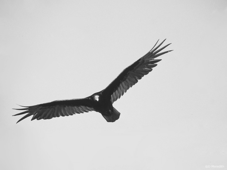 Cee's Black and White Photo Challenge: Birds