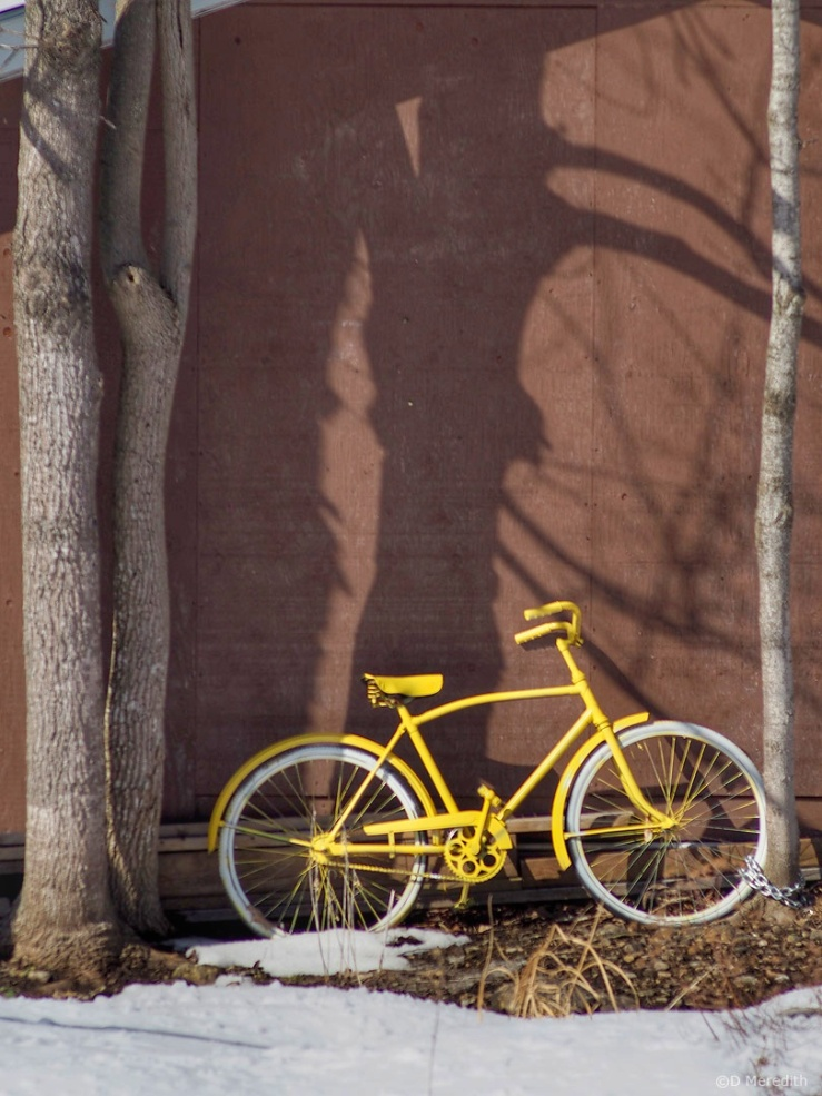 Friendly Friday Photo Challenge: Yellow