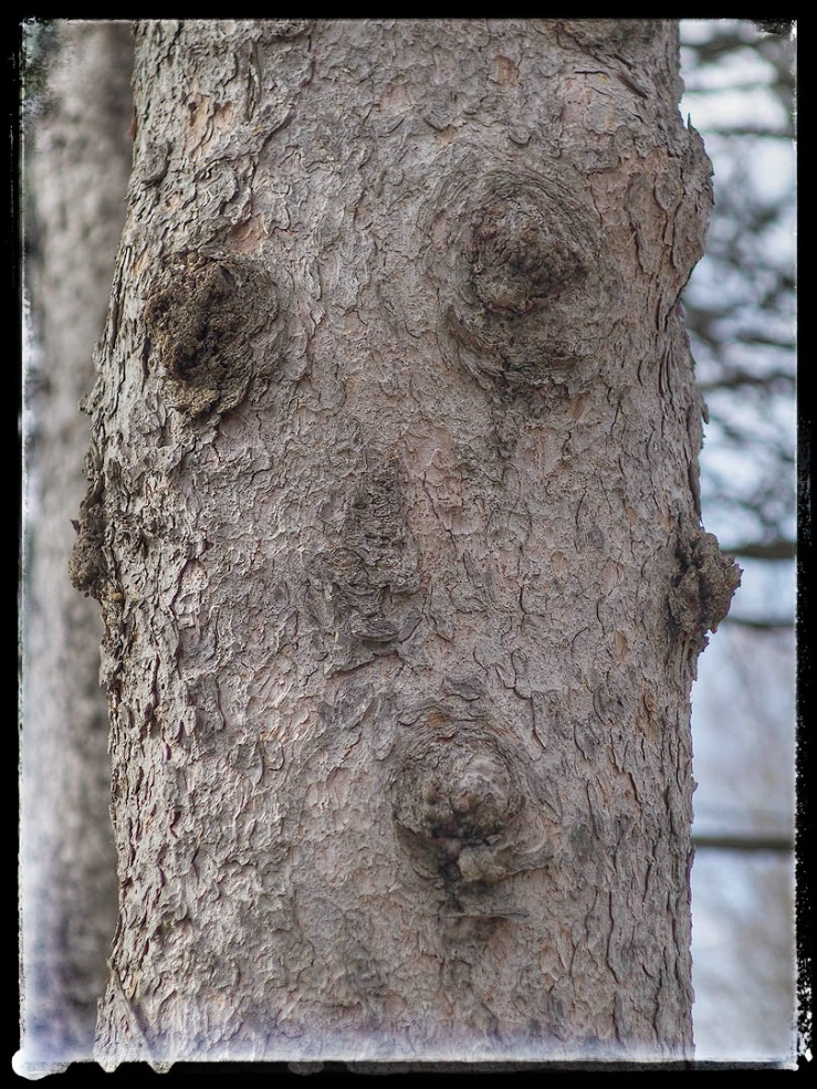One Word Sunday: Pareidolia