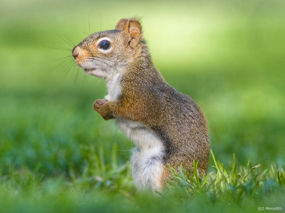 Tuesday Photo Challenge - Animals