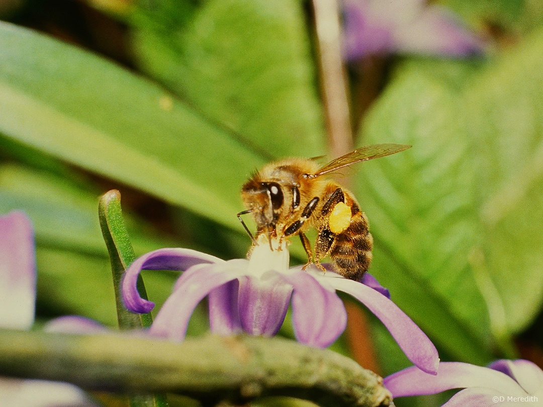 Cosmic Photo Challenge: The Birds and the Bees