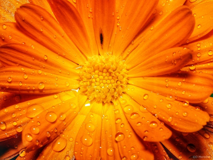 Friendly Friday: Re-imagine Orange
