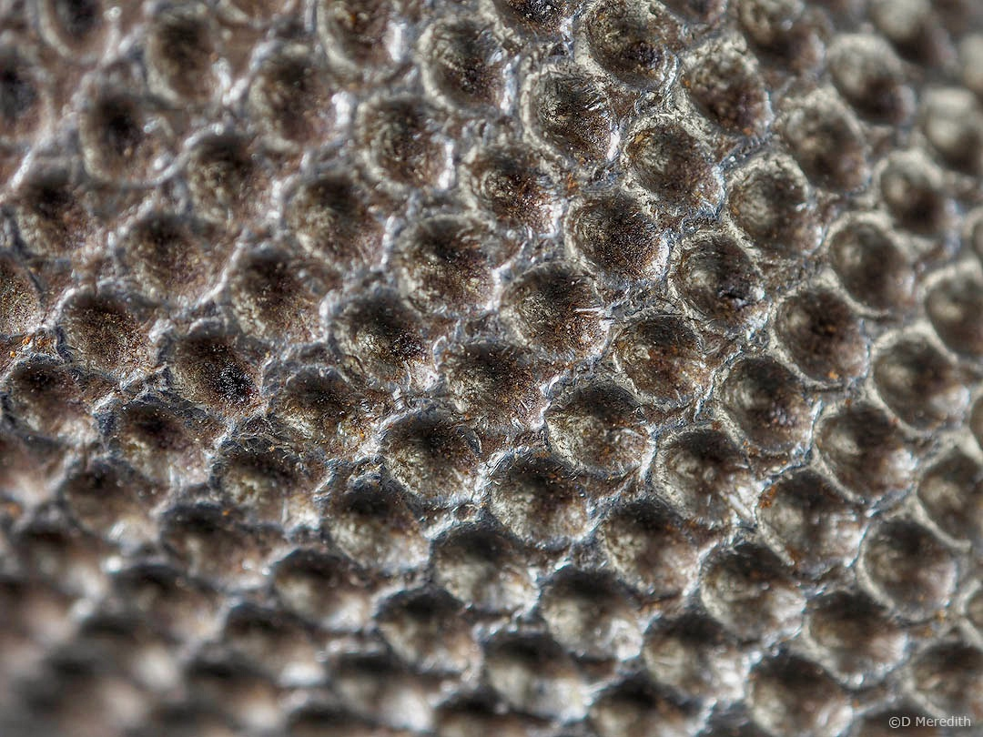 Six Word Saturday: Can anyone guess what this is?