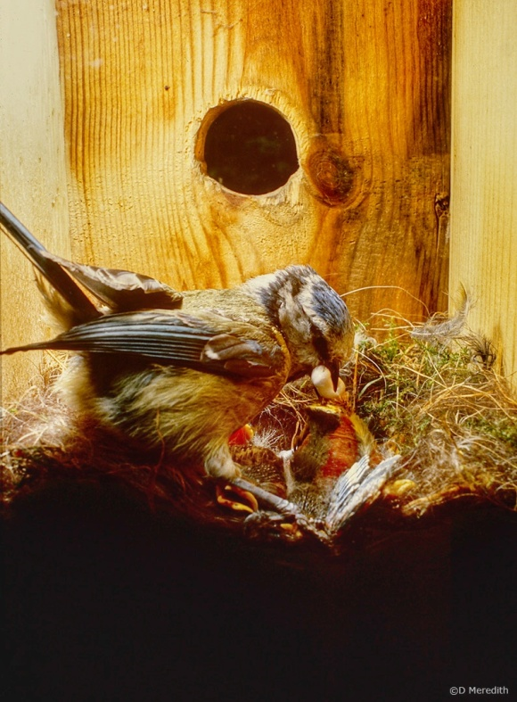 Keeping the nest clean