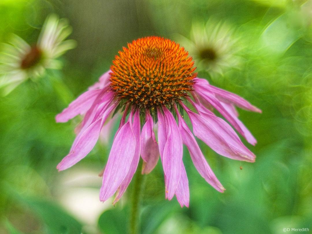 Lens-Artists Photo Challenge: One Single Flower
