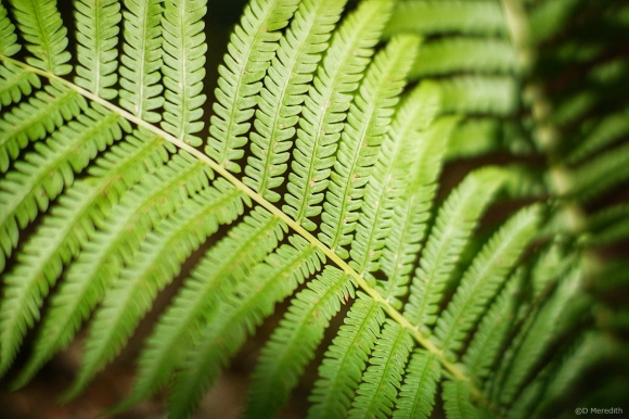 Six Word Saturday: Light and Shade on a Fern