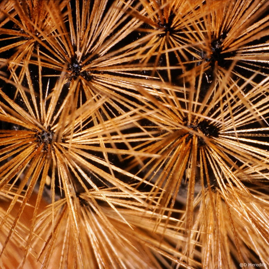 July Squares: Cactus or Sea Urchins?