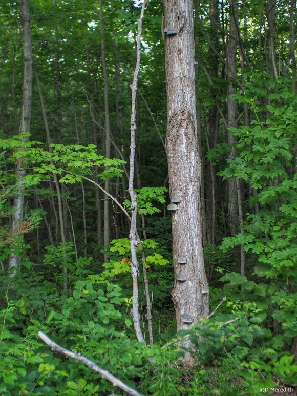 Six Word Saturday: Dead Wood, Fungi and New Growth