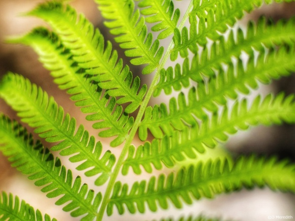 A Fern frond with the 7artisans 55mm lens.
