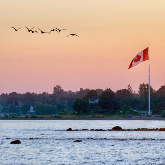October Squares: Canada Geese and the Canadian flag