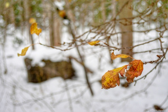 Cosmic Photo Challenge: The First Breath of Winter