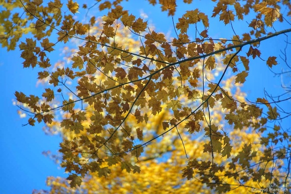 Six Word Saturday: Yellows and Browns in the Autumn
